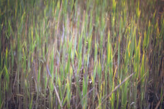 Grass in morning sunlight - Royalty Free Stock Images