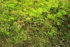 Grass Moss Stock Images