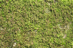 Grass Moss Royalty Free Stock Photo