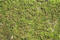 Grass Moss Royalty Free Stock Photo