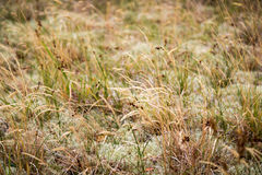 Grass and moss. For backgrounds and compositions stock photography