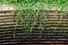 Grass and moss grow on old brick wall. Of pool royalty free stock image