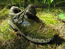 Grass, moss and lichen on an old sneaker royalty free stock image