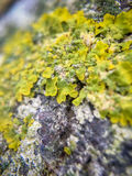 Grass, moss, mold, flowers. Leaves, close-vegetation plan, macro-photography, observation of the environment Royalty Free Stock Photo