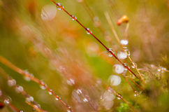Grass moss and water drops Royalty Free Stock Photo