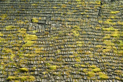 Grass moss on wood roof background Stock Images