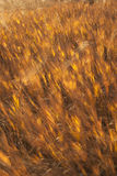 Grass motion blur Royalty Free Stock Images