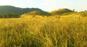 Grass Mountain beautiful in Ranong. royalty free stock photo