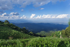 Grass, mountain and cloudy sky view of Chiangmai Thailand Royalty Free Stock Images