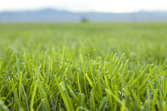 Grass with Mountain Horizon. In horizontal orientation Royalty Free Stock Photo