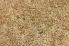Grass from a mountain meadow stock images