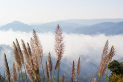 Grass on the mountain in the morning Stock Images