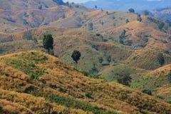 Grass mountain. Mountain in Nan Province,Thailand Stock Photos