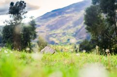 Grass and mountains with a dry trunk and plants. With sunset light and dandelions with trees in the background Royalty Free Stock Image