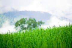 Grass on mountainside Stock Photos