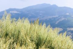 Grass on the mountainside royalty free stock photo