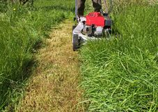 Grass mowing. Overgrown neglected lawn stock image