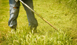 Grass mowing in jeans royalty free stock image