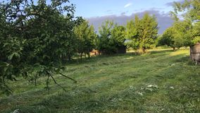 Grass mown in the village garden. It lies in the rolls and dries. Blue sky in the rays of the setting sun. Grass mown in the village garden. It lies in the stock footage