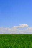 Grass n sky Royalty Free Stock Photos