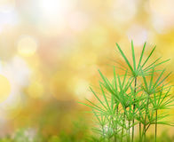 Grass natural background. Green grass natural background with selective focus Royalty Free Stock Photography