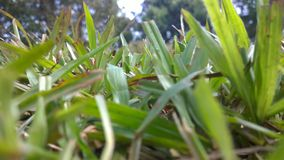 Grass. Natural green nature Stock Photography