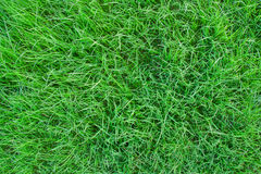 Grass. Natural outdoor green grass texture stock images
