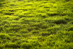 Grass. Royalty Free Stock Photography