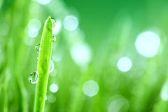 Grass nature background Royalty Free Stock Photos