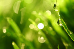 Grass nature background Stock Photos
