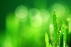 Grass nature background Royalty Free Stock Image