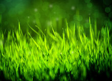 Green Grass Summer Background. A green grass nature background with selective focus Stock Image