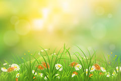 Grass nature background Stock Photography