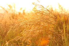 Grass Nature. Beautiful lighting and Nature in Summer Royalty Free Stock Images