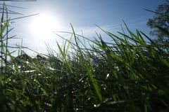 Grass. Nature green leaf  perspective foliage Royalty Free Stock Photo