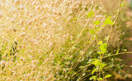 Grass nature in the moring light selective focus.  Royalty Free Stock Photo