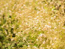 Grass nature in the moring light selective focus.  Stock Photo
