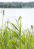Grass near lake Stock Photography