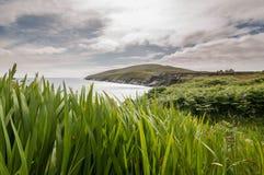 Grass near ocean Stock Images
