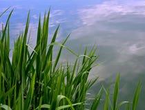 Grass near the pond Stock Photos