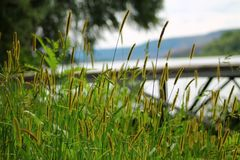 Grass near the river stock image