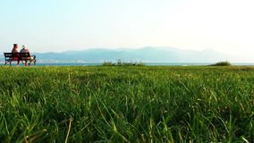 Grass near the seaside. Video stock video