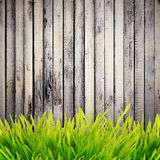 Grass near wall Royalty Free Stock Photography