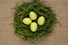 Grass nest with eggs Stock Photography