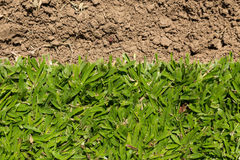 Grass new cut Stock Photography