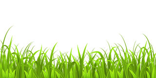Grass new Stock Photography