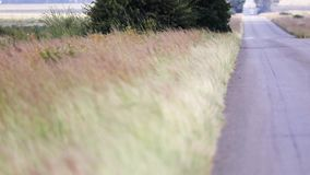Grass next to long road blowing in the wind. Brown Grass blowing in the wind next to a long road in South Africa, witht he focus that changes stock footage