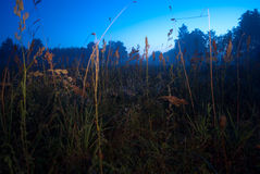 Grass in night Stock Images