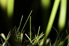 Grass at the Night. Plants. Nature. Amazing Nature Royalty Free Stock Images