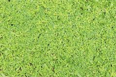 Grass and non-grass Stock Photo